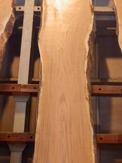 サクラ盤木